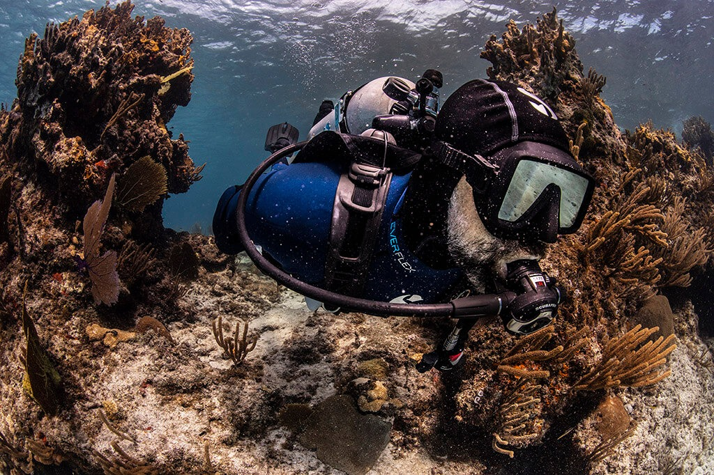 ALBE | Scuba Diver do 12M